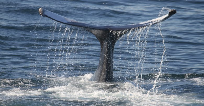 Whale Alert Reveals Indiscriminate Sale Of XRP By Whales